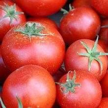 pomidor_02