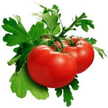 tomat_01