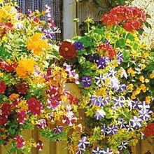 Сорта и гибриды цветов