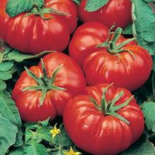 томат Marmande