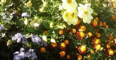 25_Цветы