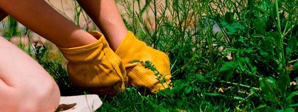 работы по уничтожению сорняков
