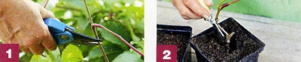 Вертикальное озеленение12