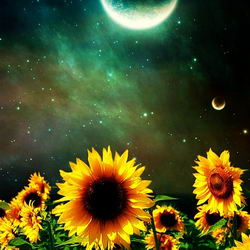 Луна_Июль