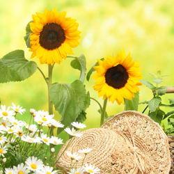 июнь работы в саду и огороде