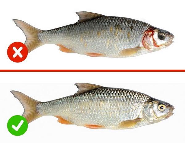 6_Рыба