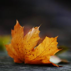Советы садоводам и огородникам на Октябрь